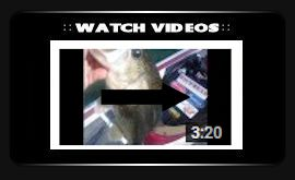 watch-fishing-videos-3.jpg